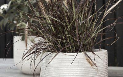Krukväxter på hösten Fem sätt att ta hand om dina krukväxter på hösten