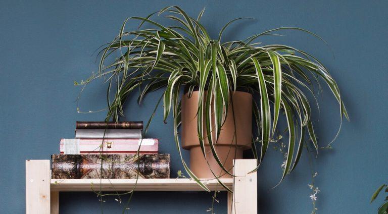 krukväxter under semestern