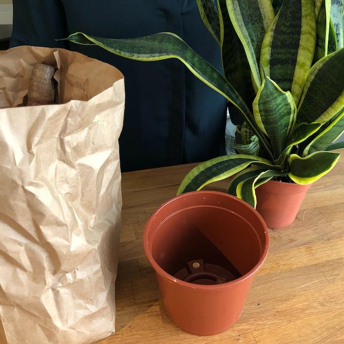 Plantedli tipsar: Hur man planterar om krukväxter Omplanteringsguide för nybörjare