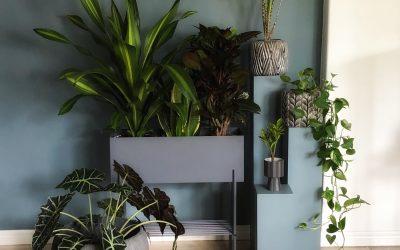 Fem tips för att undvika ohyra i nya krukväxter Så slipper du köpa med ohyra i krukväxter från butiken