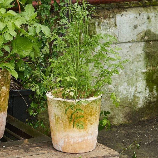 vårfixa krukväxter