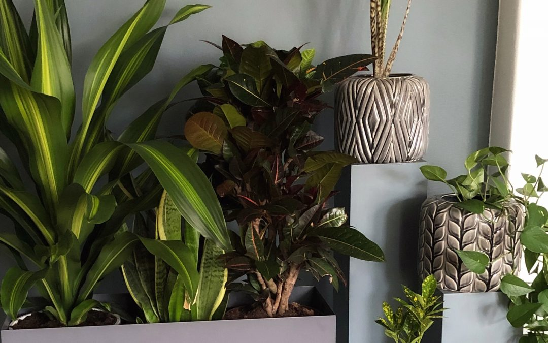 3 snygga växttrender 2019 Stora växttrender 2019