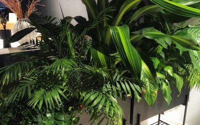 Guide till att ta sticklingar Plantbyrån gästbloggar om sticklingar