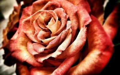 Gröna alla hjärtans dag presenter Romantiska buketter och krukväxter till alla hjärtans dag