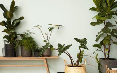 Nybörjarguide krukväxter Plantbyråns enkla tips och tricks för nybörjaren på krukväxter!