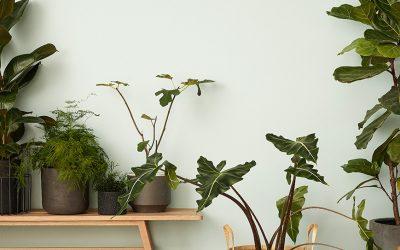 Att tänka på när du köper en ny växt Inspektera noga och slipp ohyra och dålig kvalitet