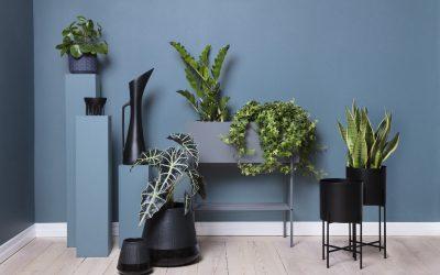 Lättskötta växter Lättskötta växter för dig som inte har gröna fingrar