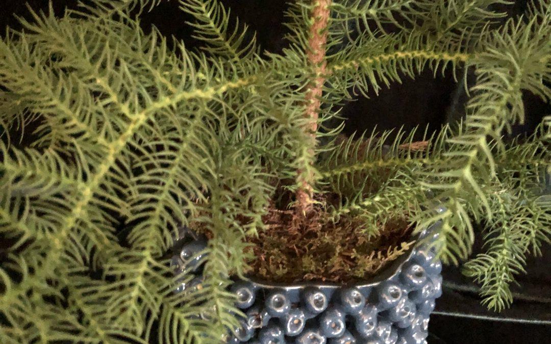 Jultrender växter och blommor 2019 5 tips på jultrender 2019