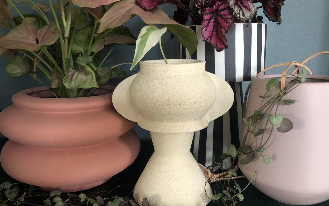 Romantiska krukväxter till alla hjärtans dag! Romantiska krukväxter + snygga krukor = bästa presenten